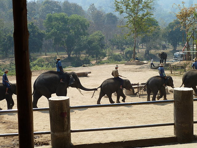 Elephant Show Chiang Mai